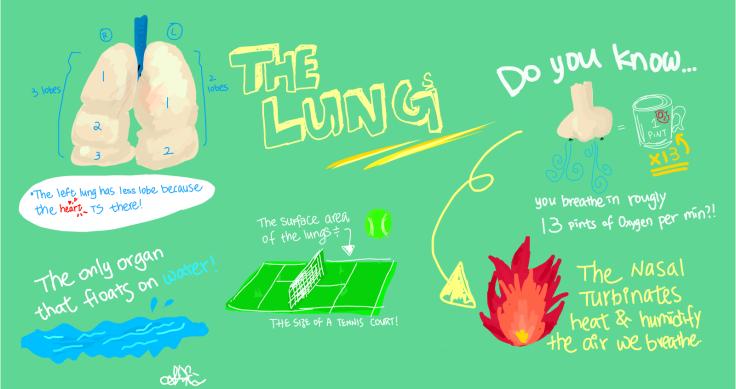 lung infogram